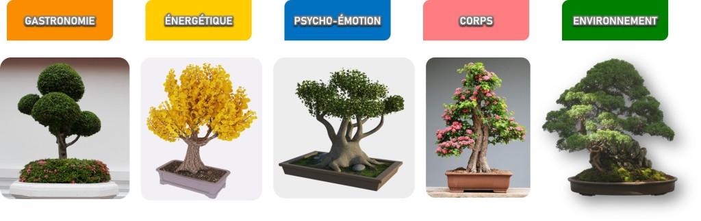5 arbres de Vie  GASTRONOMIE ÉNERGÉTIQUE PSYCHO-ÉMOTION CORPS ENVIRONNEMENT
